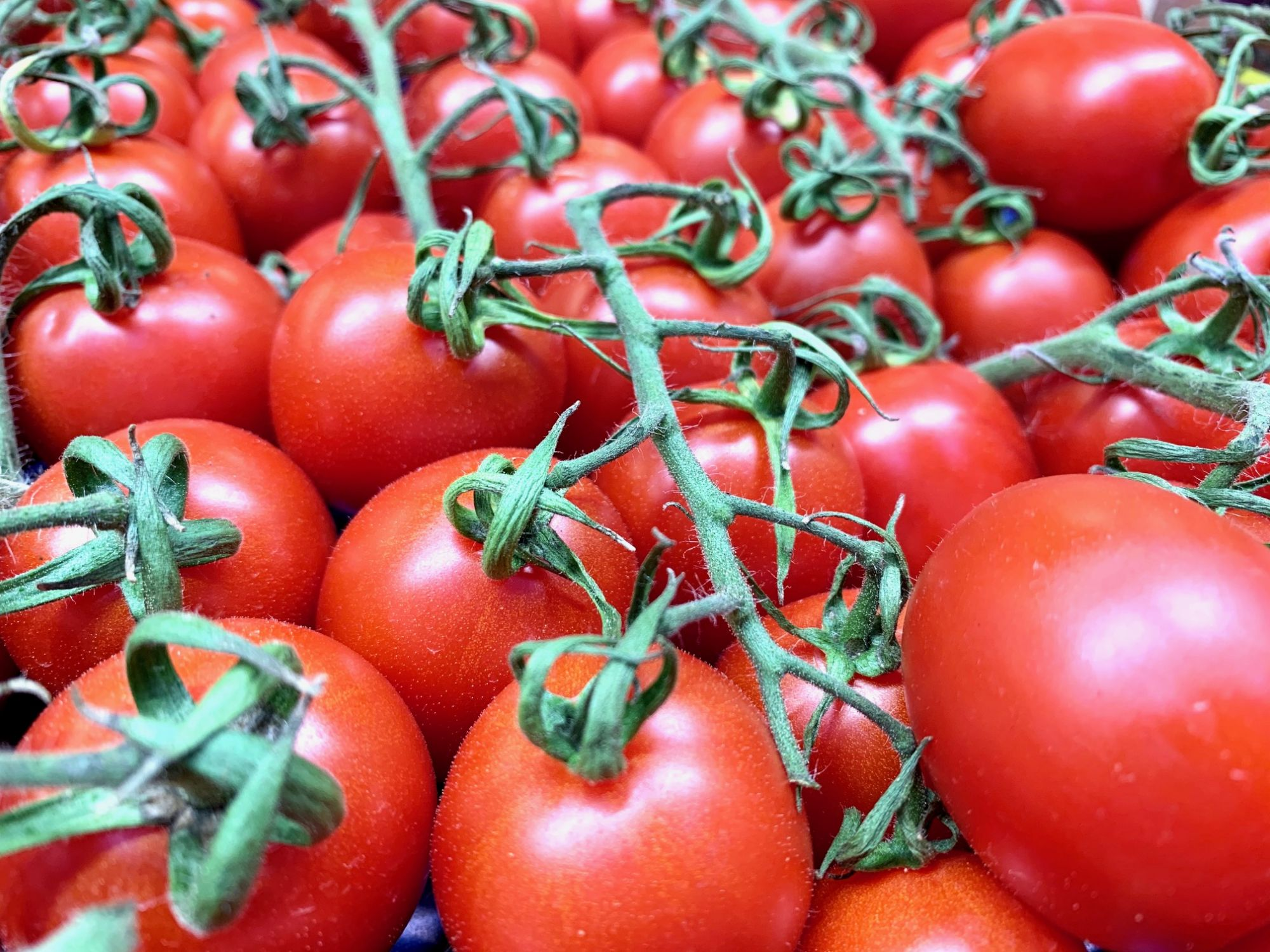 Piccadilly Tomaten aus Sizilien